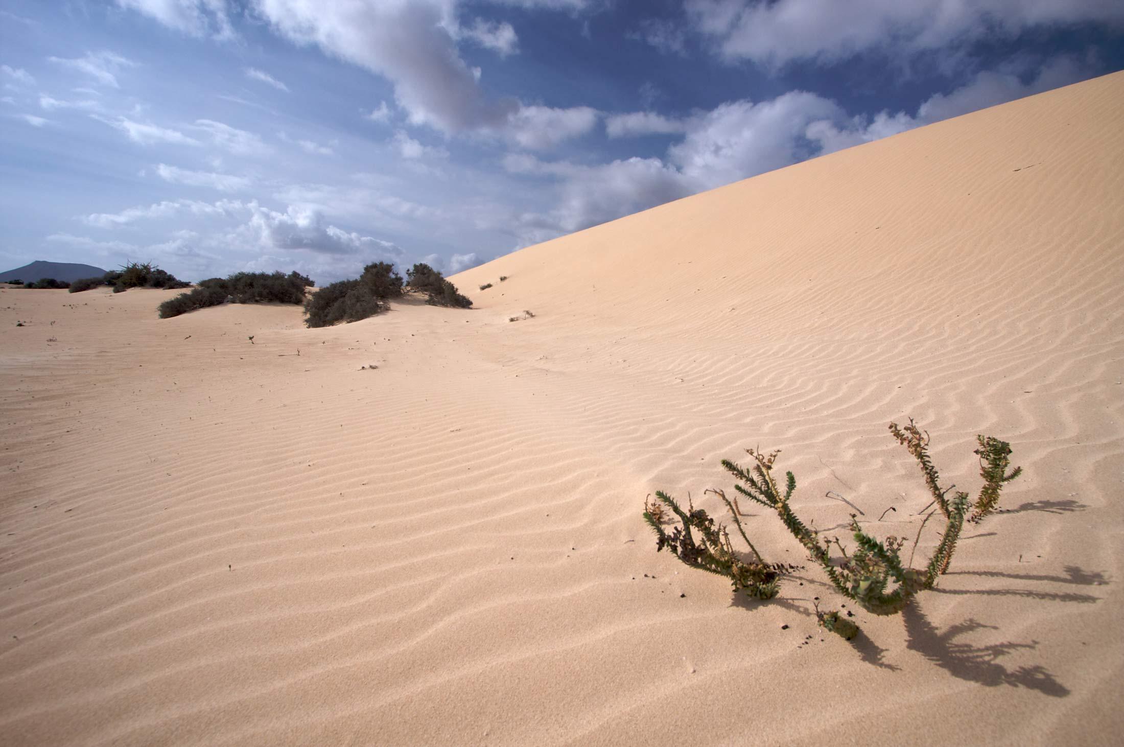 Fuerteventura-473