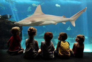 Friendly Shark of Hawaii