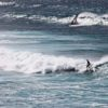 Surfing on MAUI