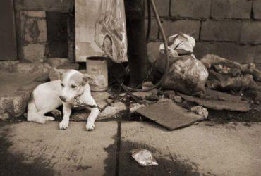 Filipino Dogs
