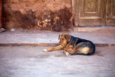 Dogs of South America