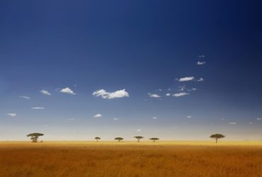 The Serengeti – African Safari