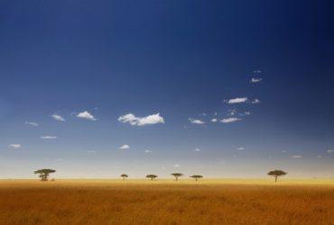 The Serengeti – African Safari