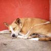 Dog's life in Cuba