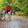 A day with Malamutes