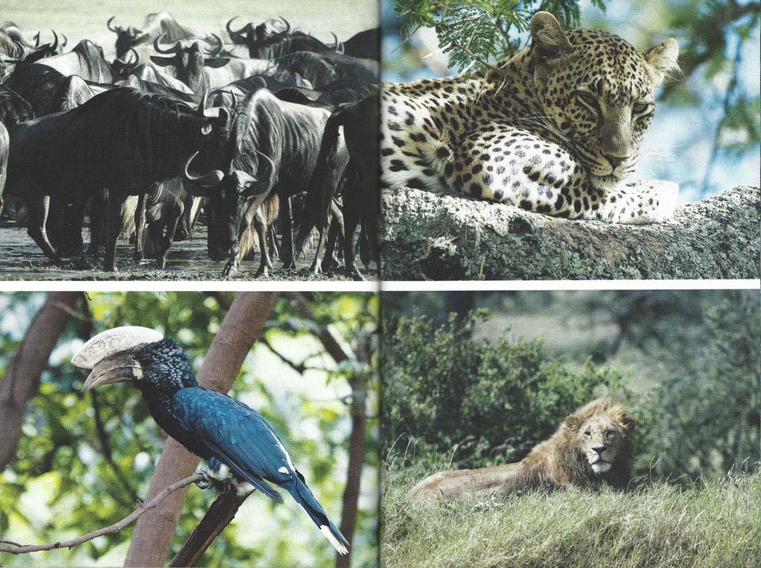 Svet-in-ljudje-safari_jusmedic_3