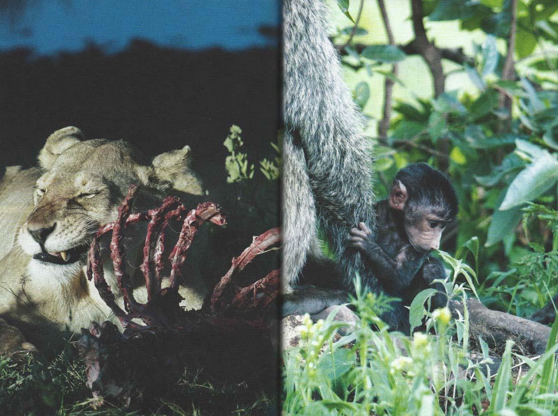 Svet-in-ljudje-safari_jusmedic_4