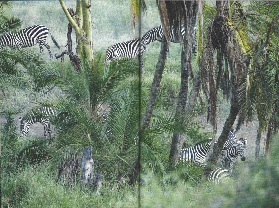 Svet-in-ljudje-safari_jusmedic_5
