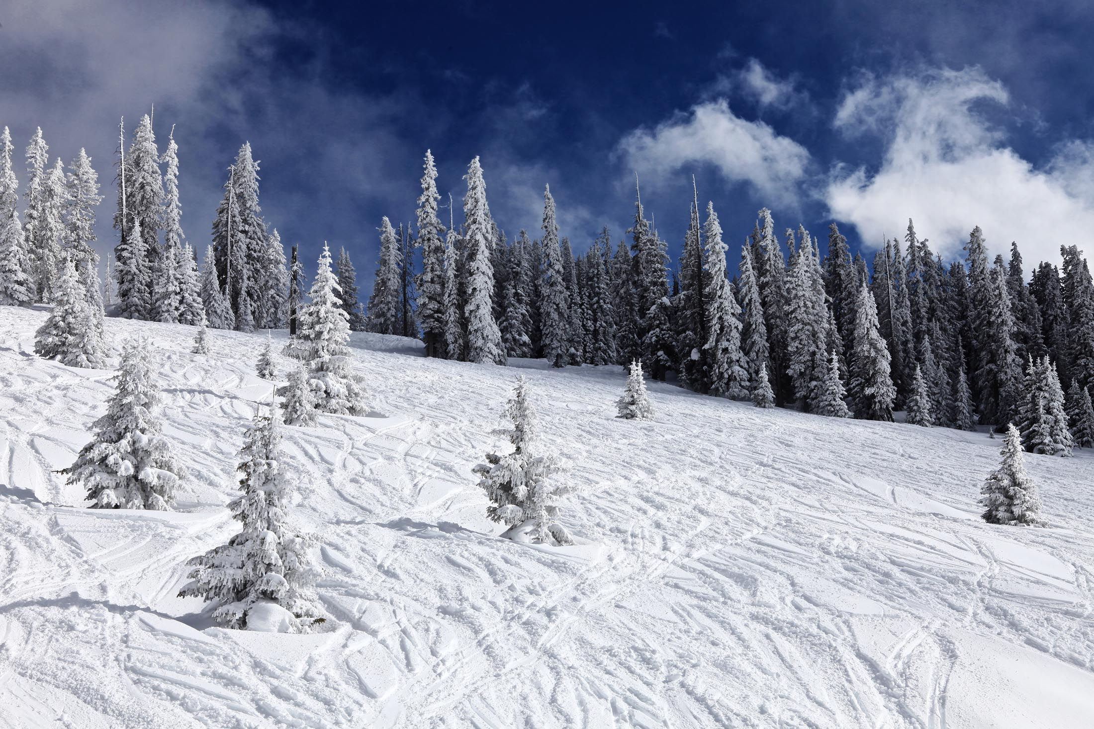 Powder in Vail, Colorado
