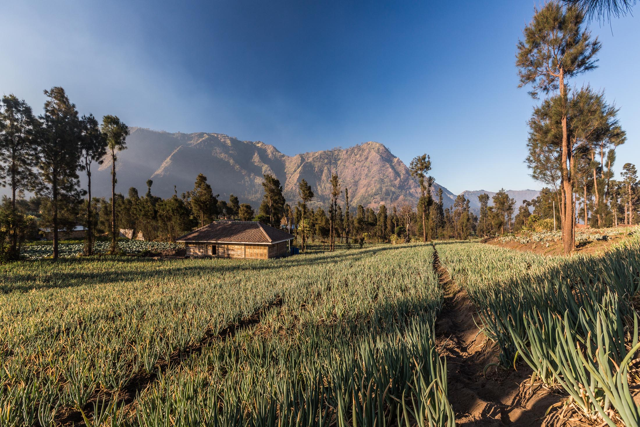 Villages near Mt. Bromo, Java, Indonesia