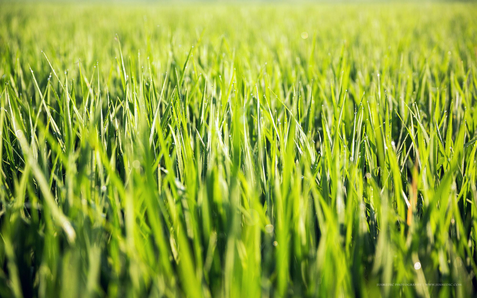 03-16-March-Rice-fields-jusmedic.com-2000px