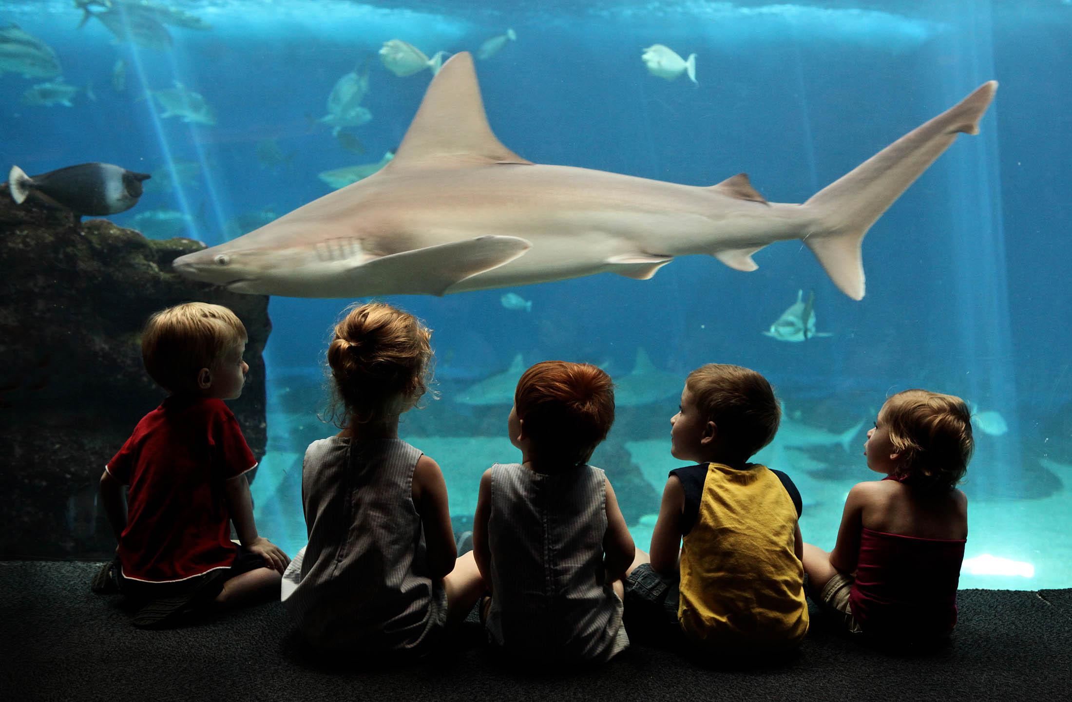 Friendly Shark, Hawaii
