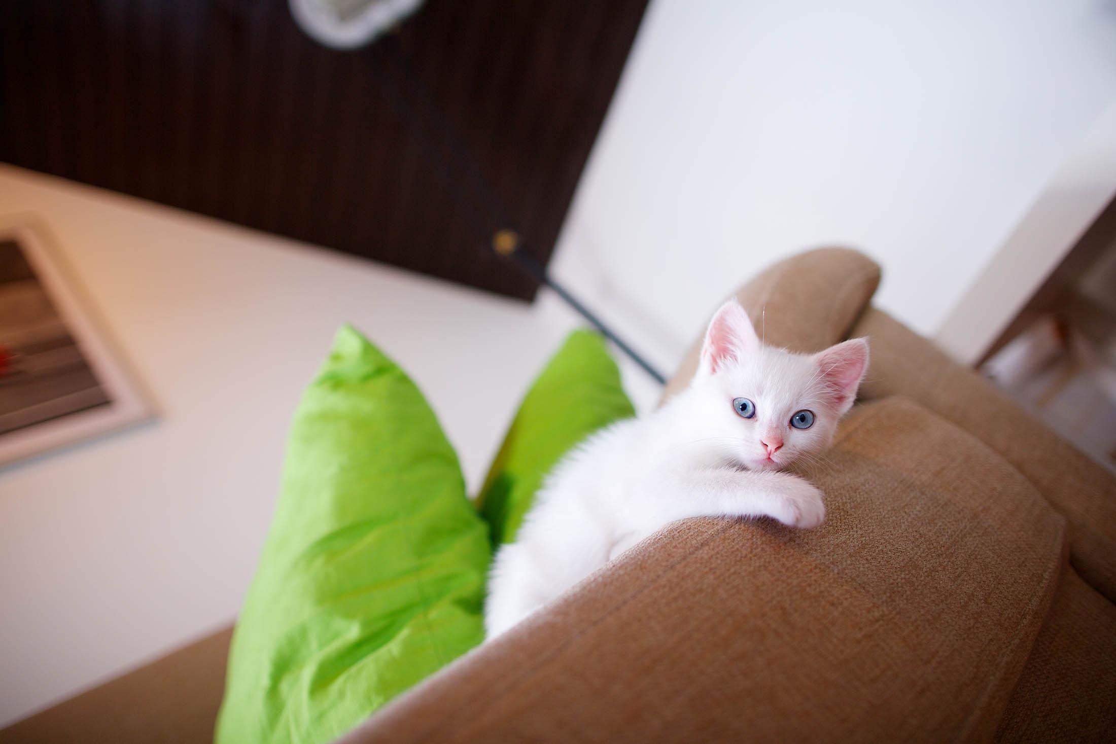 Khaleesi - Little White Monster