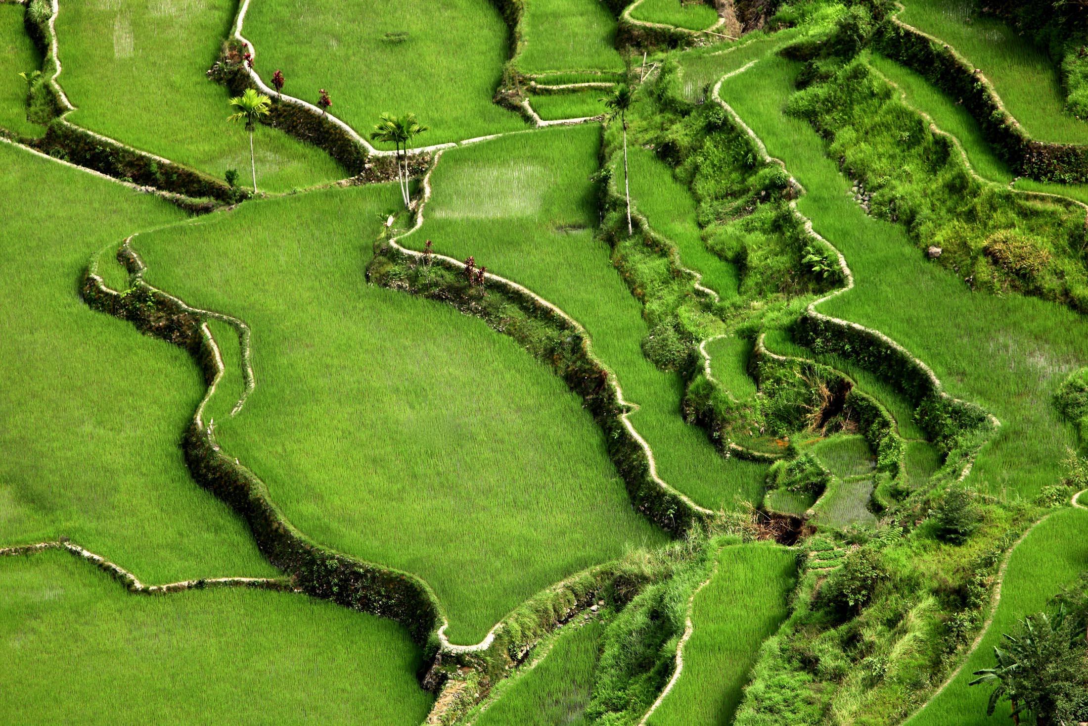 Rice paddies, Luzon, Philippines