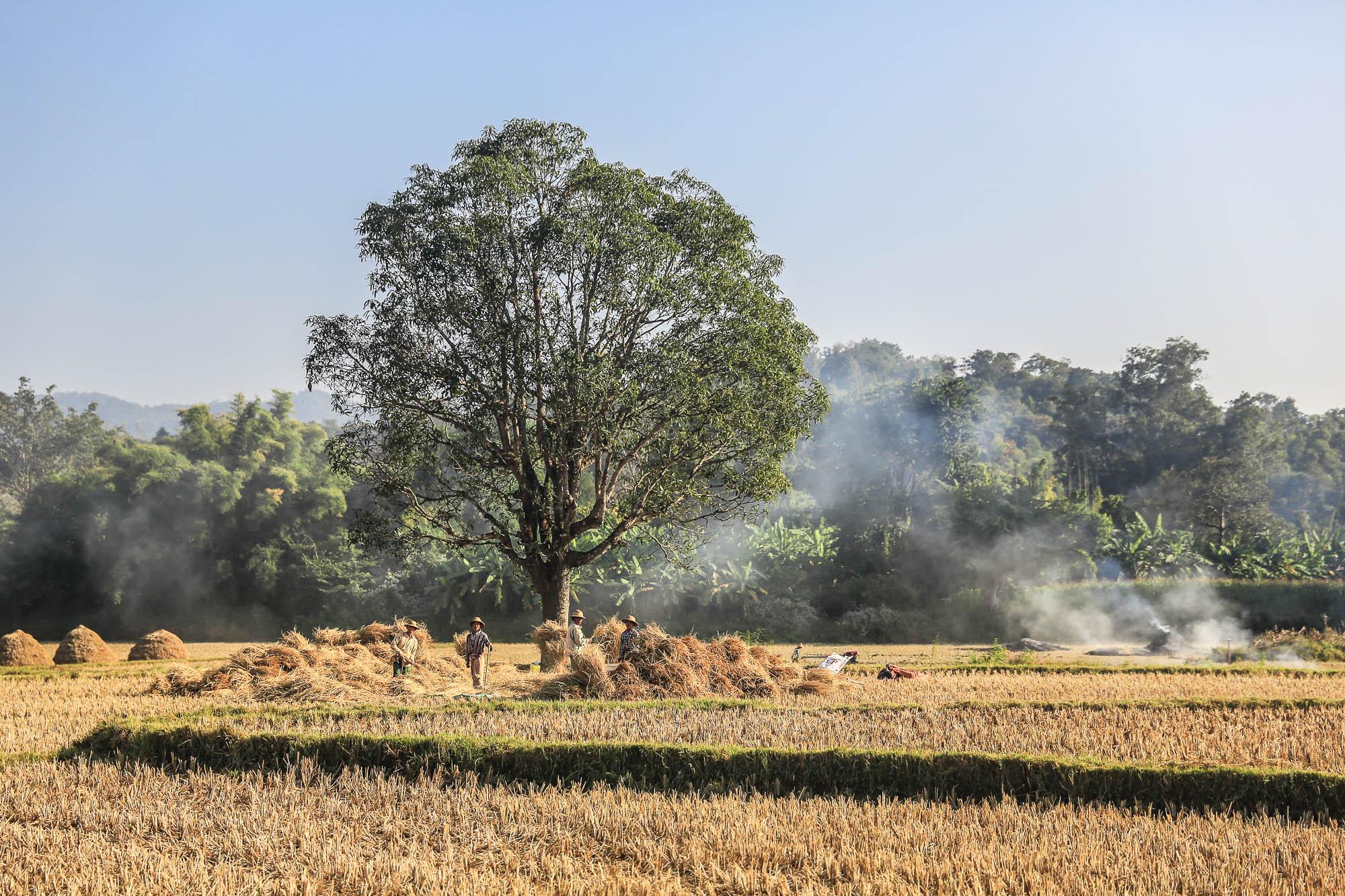 Myanmar_2014_JusMedic-792