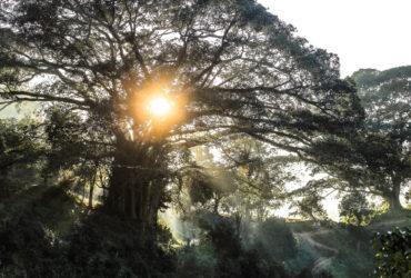 Trekking for tea in Myanmar