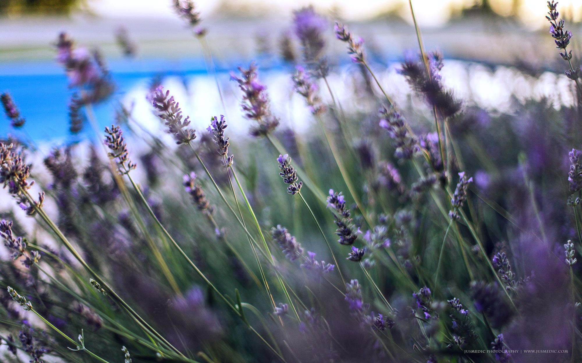 06-16-June-Lavender-Istria-jusmedic.com-2000px