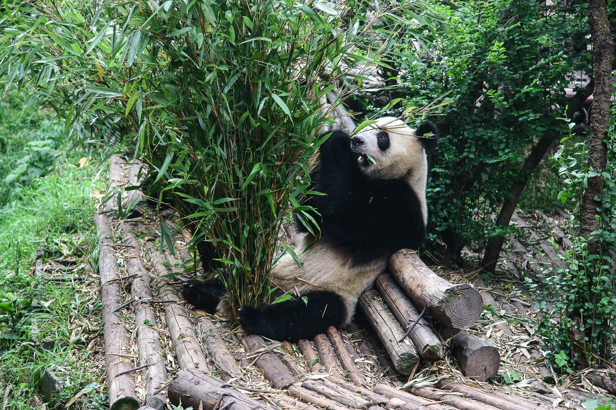 CHINA_2007_jusmedic - 384