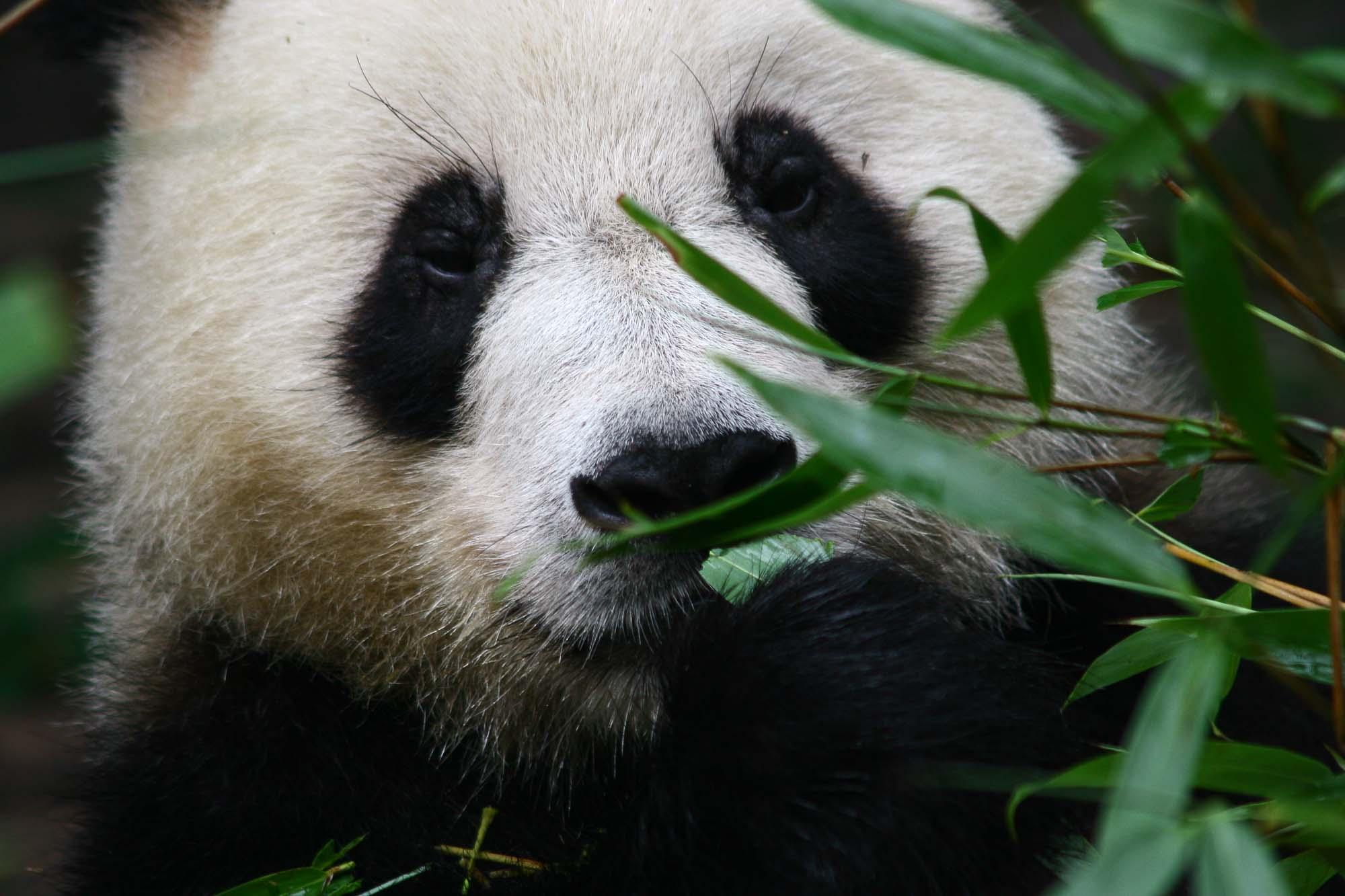 CHINA_2007_jusmedic - 388