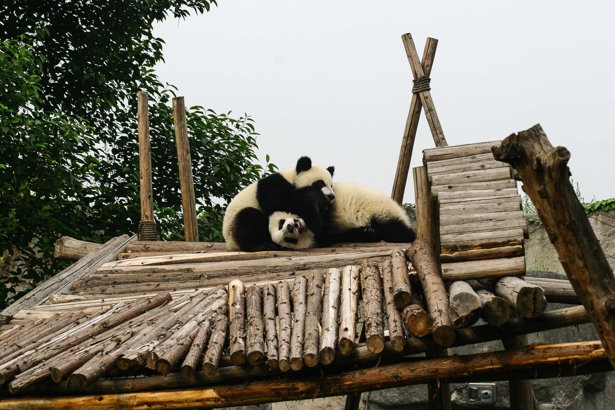 CHINA_2007_jusmedic - 405