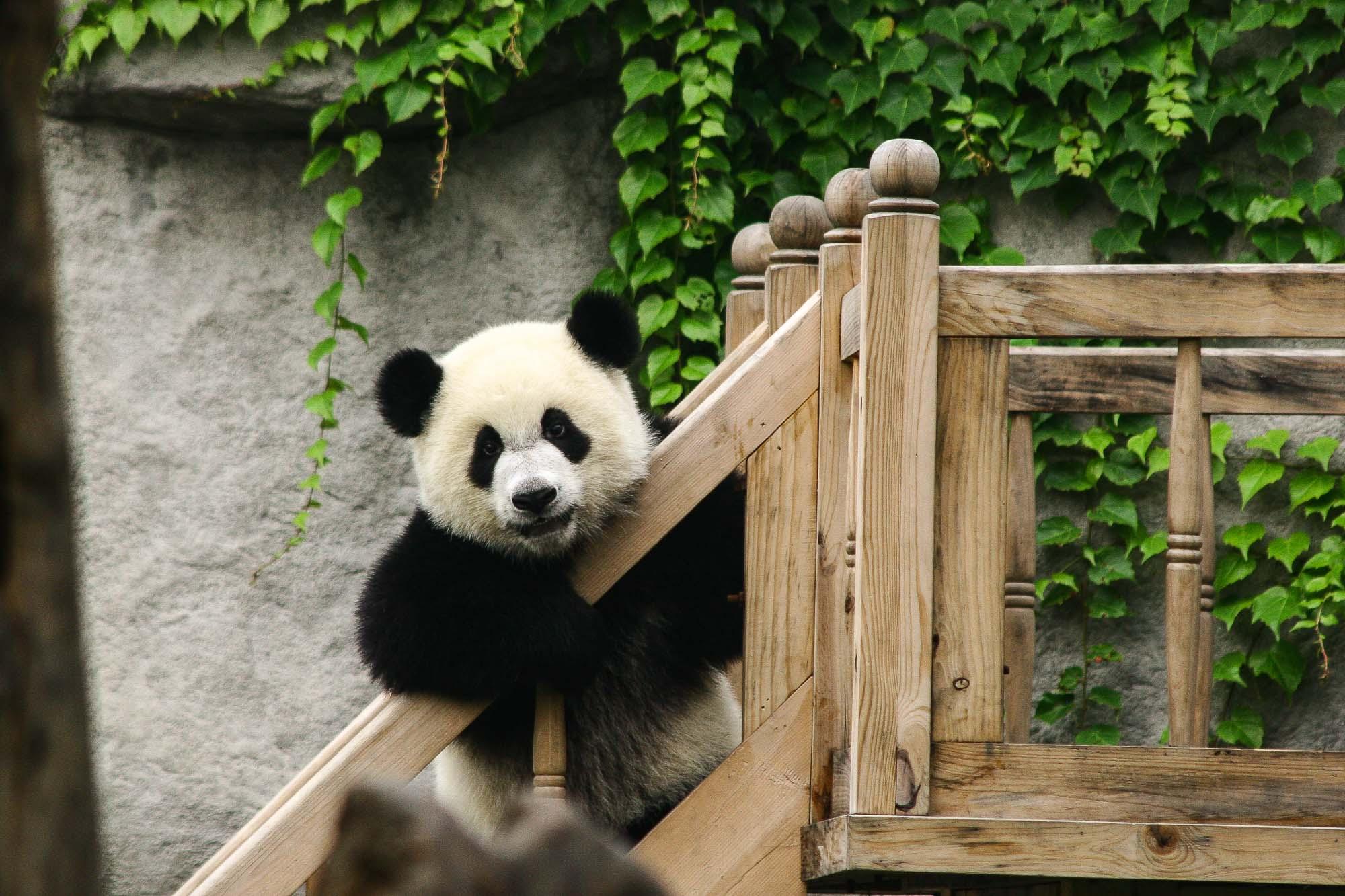 CHINA_2007_jusmedic - 419