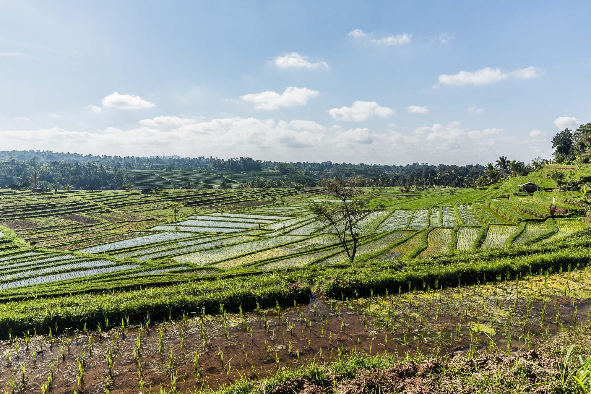 INDONESIA_2015_04 BALI_JusMedic_1094