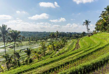 The Jatiluwih Rice Terraces – Unesco World Heritage