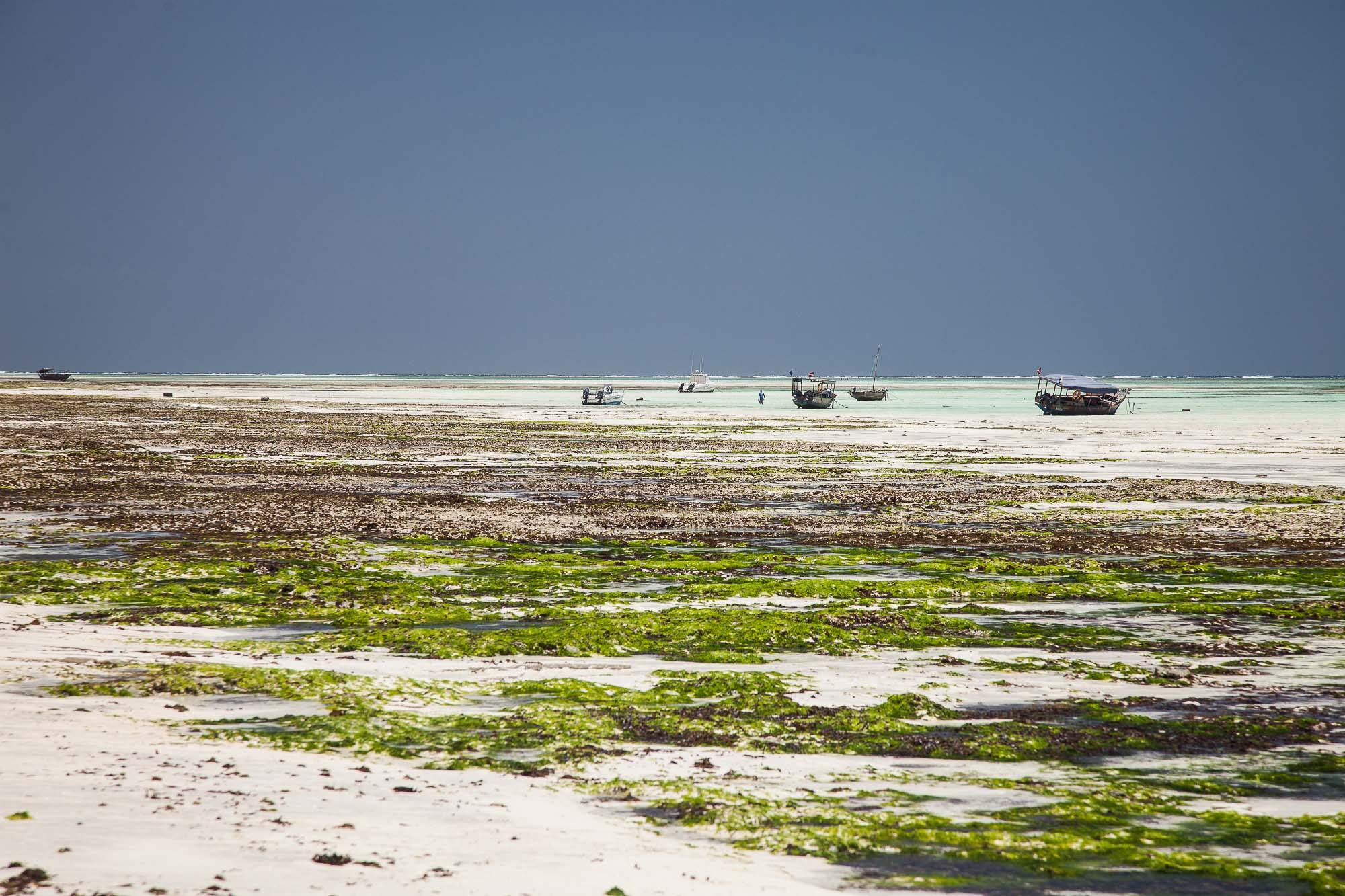 Tanzania 2011 # 4836