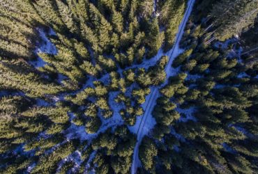 Pokljuka forests from the AIR