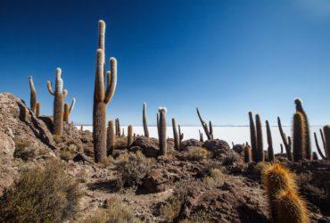 Isla Incahuasi – Bolivia – Salar de Uyuni