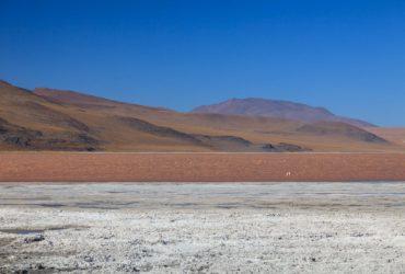 Laguna Colorada – Altiplano Bolivia